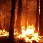 Mostanra sikerült eloltani az összes erdőtüzet Oroszországban