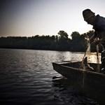Egzotikus halat fogtak a Dunában