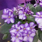 Itt a tavasz! 3 sokat virágzó dísznövény otthonra