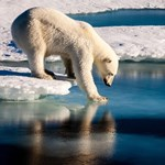 Hatalmas botrány lett a norvégiai Spitzbergákon utasokra támadó jegesmedve lelövéséből