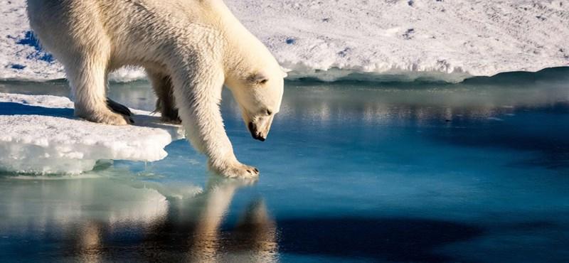 Lelőttek egy jegesmedvét, mert rátámadt egy emberre
