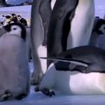Mintha Tarantino forgatta volna a Táncoló talpakat - antarktiszi katasztrófa
