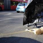 Őzet gázolt halálra egy autós Józsefvárosban