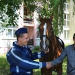 Társasházak között fogták be az elszabadult Zápor lovat – kincset érő fotó