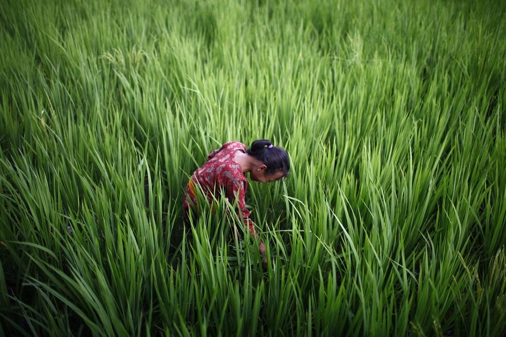 Hét képei nagyítás Csigát kereső nepáli nő Katmandu környékén