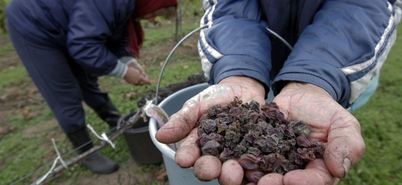 Legyen nemzetközi luxustermék a tokaji bor