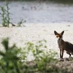 Több állatot megmérgeztek a Duna-Dráva Nemzeti Parkban