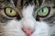 Mostantól törvény védi New York macskáit, szabadon karmolhatják a bútorokat