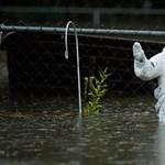 Elszámolták, nem 80, hanem 300 millió embernek tehet be a tengerszint-emelkedés