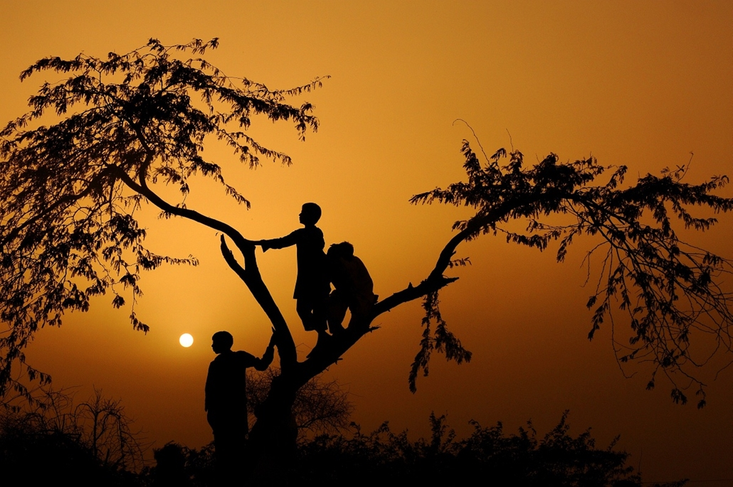 Fák világnapja - PAKISTAN, Faridabad : Pakistani children living in the town of Faridabad, cutoff by surrounding flood waters, climb a tree to watch a navy helicopter evacuating residents to safer ground in Sindh province, Pakistan, on September 14, 2010.