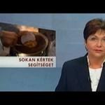 Krisnások: nem volt hírhamisítás, köszönjük az m1 Híradójának