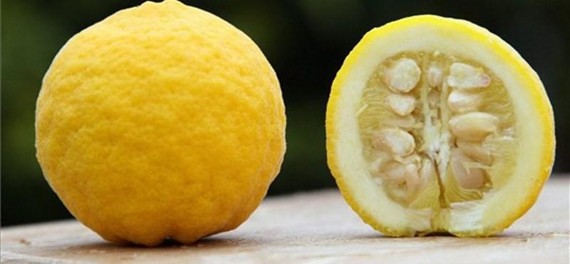 C-vitaminnal is küzdhetünk az Alzheimer-kór ellen