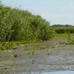 Tele van a Duna romániai szakasza sertéstetemekkel