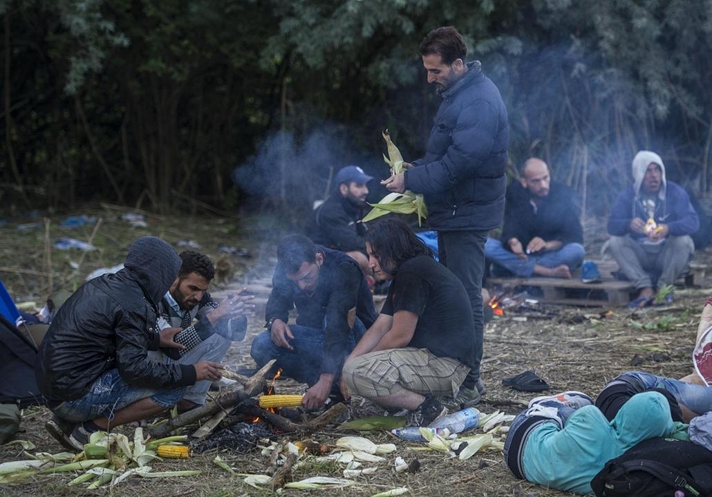 tg. menekült nagyítás - 2015.08.24-25. Menekültek léptek be Magyarországra Röszkénél kedd reggel, menekült, migráns, bevándorló, határ