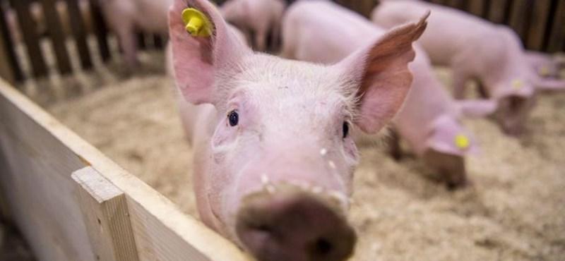 A sertéshús nagyobbat drágult, mint amennyivel az átlagkereset nőtt