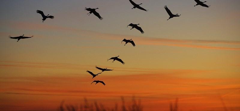 Sürgősen tennünk kell valamit: 1200 állatfajt fenyeget kihalás