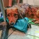 Forró autóba zárt kutyát mentettek meg a Hortobágyi Madárkórház munkatársai