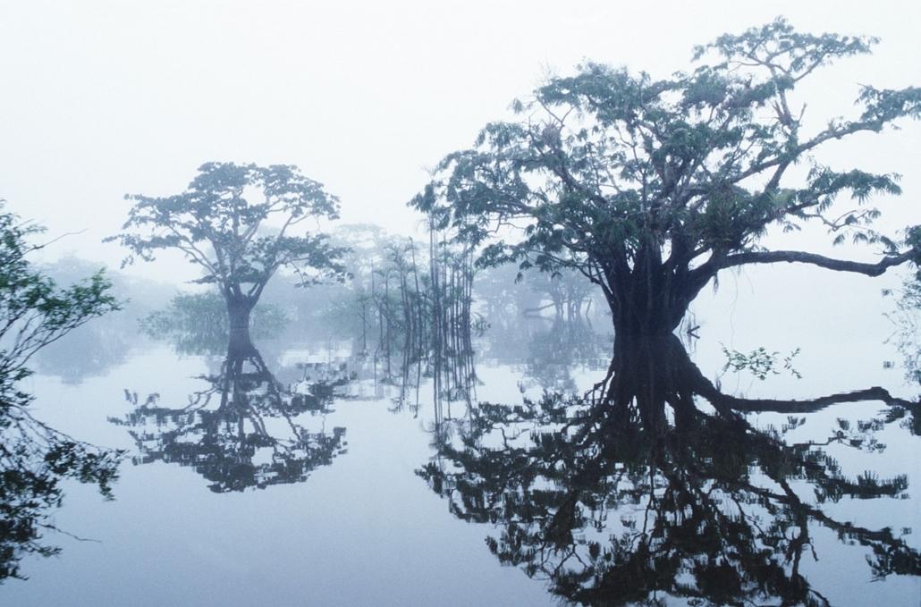 Fák világnapja - Ecuador, Cuyabeno Nature Reserve, Laguna Grande, inundation woods