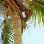 Önt is elviszi a főnöke a Karib-szigetekre nyaralni újévi ajándékként?