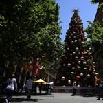 Igazán különleges karácsonyfája lesz a Vatikánnak idén