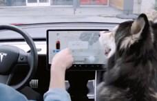 Nagy mágus Elon Musk, mostantól a kutyák is imádni fogják