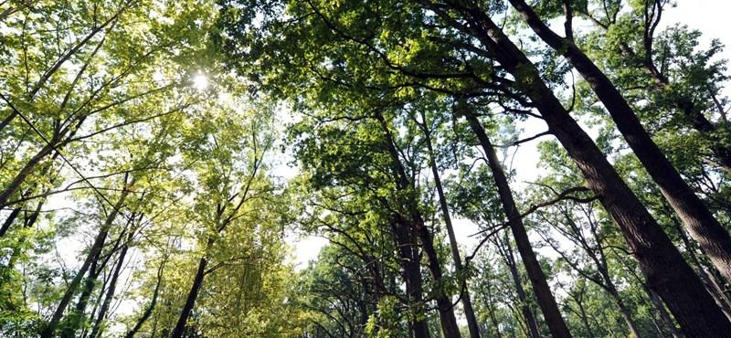 Zseniális honlap: belehallgathatunk a nemzeti parkok hangjaiba