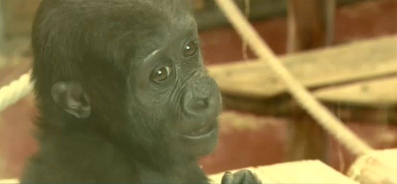 Nemes célért kezdett mobilokat gyűjteni az Állatkert