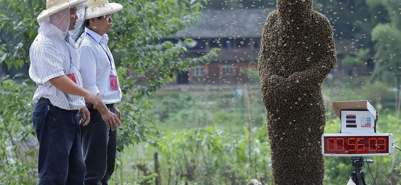 Fotó: 26 kilónyi méhbunda egy kínai férfin