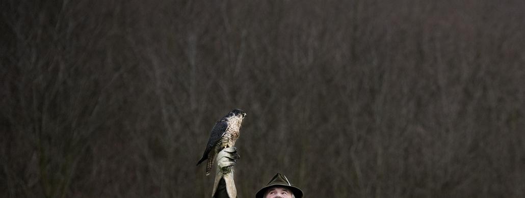 2012.11.29. - Solymászok - Nagypáli-Zalaegerszeg - sólyom, madár