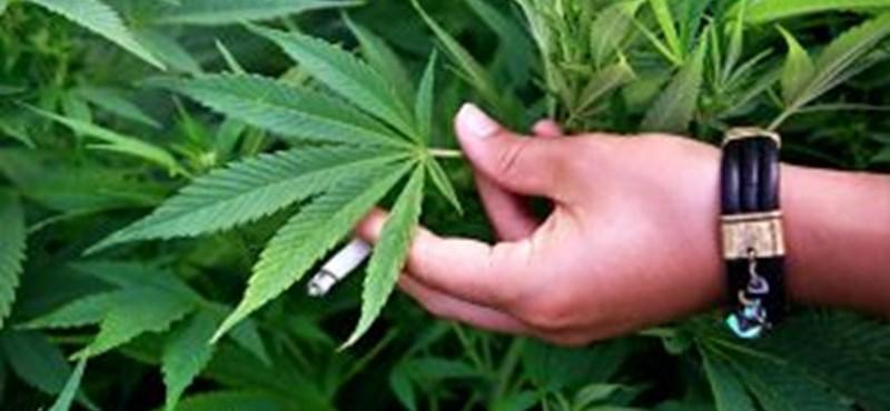 Hollandiában bevezetik a marihuána-igazolványt