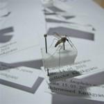 Nincs pénz, marad a szúnyoginvázió