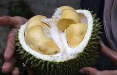Ez a gyümölcs olyan büdös, hogy mobilt lehet tölteni vele