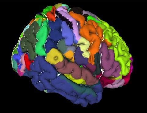 agyi terület látása