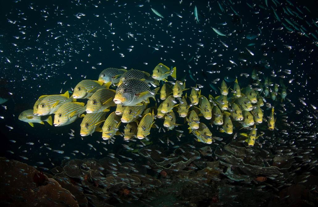 NE HASZNÁLD  Budapest International Foto Awards Természet kategória II helyezett Édesajkú halak