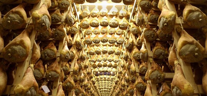 Szeméttel etetett disznókból készült a pármai sonka