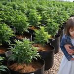 Marihuanával gyógyítják a hétéves kislány epilepsziáját