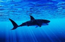 Három cápa mart halálra egy amerikai turistát a Bahamákon