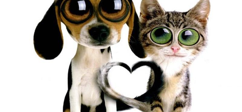 Kutyák és macskák az olasz szomszédok közötti viták áldozatai