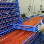18 ezer tonna lazac ment kárba Chilében