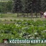 Van egy magyar város, ahol nem építették, hanem felszántották a focipályát