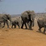 Raspberry számítógéppel védenék az elefántokat