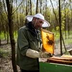 Amerikában pusztulnak, nálunk éheznek a méhek