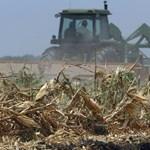 Drágultak a mezőgazdasági termékek