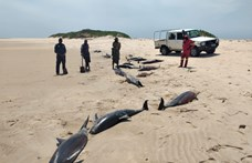 Száz delfin lelte halálát egy mozambiki sziget partján