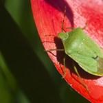 Elképesztő, mekkora kárt okoznak az invazív növények és állatok