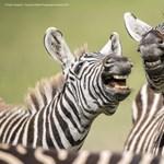 Parádés a mezőny az év legviccesebb állatos természetfotója döntőjében