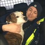 Elcsatangolt kutyákat mentettek rendőrök a forgalmas M0-sról