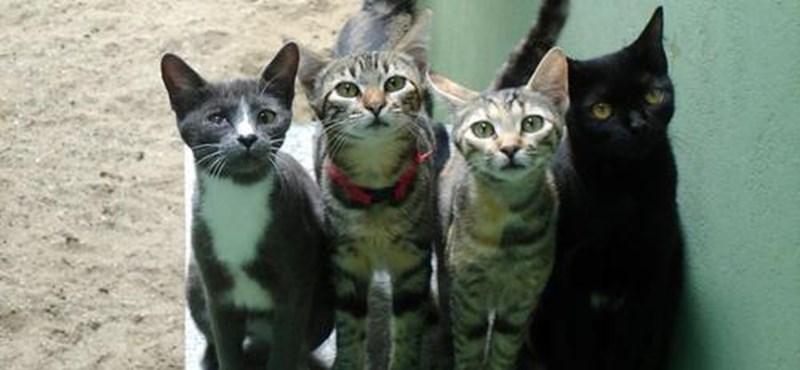 Fagyállóval mérgezik a macskákat Szegeden