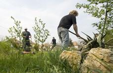 Népszava: 100 ezer közmunkás munkája szűnhet meg négy év alatt