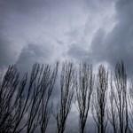 Szép ígérettel kecsegtet a városligeti fákat átültető cég